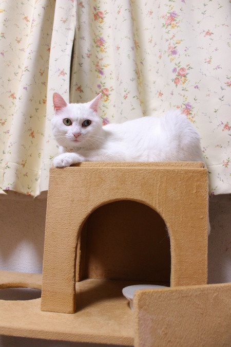 Cattower8