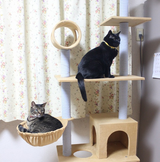Cattower16
