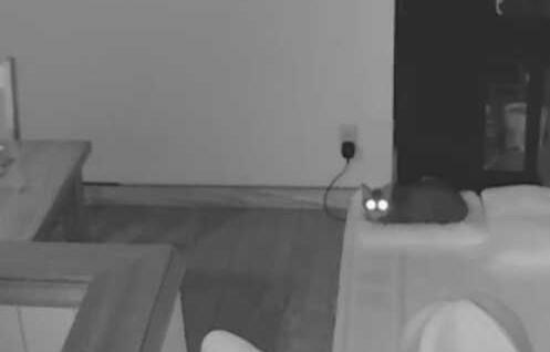Catseye1