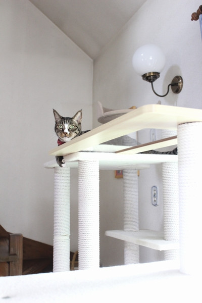 Cattower18