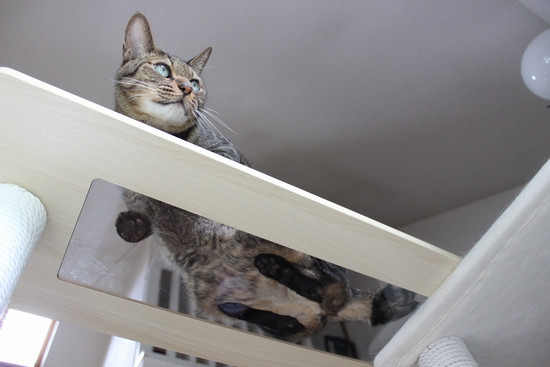 Cattower20